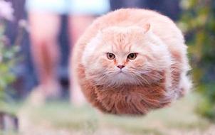 Loài mèo đã đánh mất hình tượng sang chảnh như thế nào?