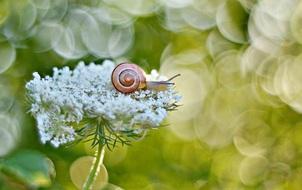 Bộ ảnh đẹp lung linh về ốc sên quấn quít bên hoa trong sương sớm