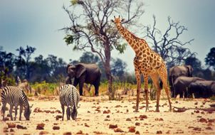 Tìm được 10 sinh vật sống lâu, bạn xứng đáng là nhà sinh vật học đại tài