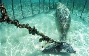 Không chỉ chó mèo, thậm chí động vật biển cũng bị ngược đãi thậm tệ