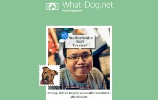 """Cười không nhặt được mồm với ứng dụng """"Bạn là loài chó nào?"""" của Microsoft"""