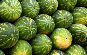 Bạn có phân biệt được quả dưa hấu đực và quả dưa hấu cái không?
