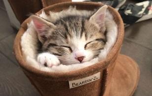 14 chú mèo lười bạ đâu ngủ đấy nhưng đáng yêu chết đi được