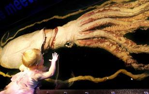 3 loài mực bị gắn mác quái vật khổng lồ từ khi sinh ra