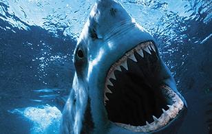 """Kích thước các """"quái vật biển khơi"""" ngày càng to hơn"""