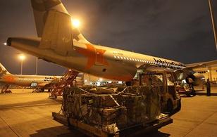 Động vật quý hiếm lên máy bay ra Phú Quốc