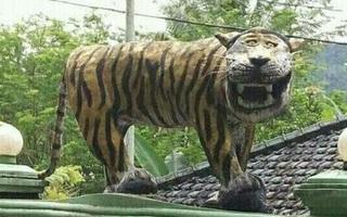 Phát hiện thấy bức tượng hổ mặt ngu buồn cười nhất thế giới