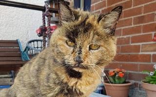 Mèo cụ sống lâu tương đương với 141 tuổi người nhưng vẫn khỏe như vâm