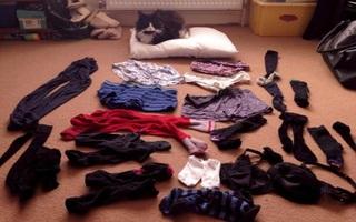 """Chú mèo """"biến thái"""" có sở thích ăn cắp đồ lót nhà hàng xóm"""
