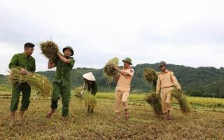 Hình ảnh đẹp: Công an miền Trung giúp dân gặt lúa chạy bão số 10