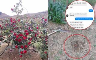 Cậu bé chăm sóc cây hoa hồng đắt giá suốt 10 năm để rồi bị người lạ đánh ô tô vào tận sân nhà ăn trộm