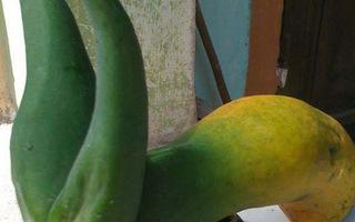Sê-ri củ quả kỳ lạ bậc nhất Việt Nam