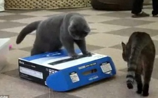 """Chết cười với clip chú mèo """"nham hiểm""""... """"hãm hại"""" đồng bọn"""