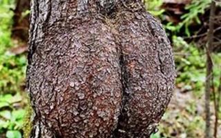 Những thân cây kì quặc nhất thế giới
