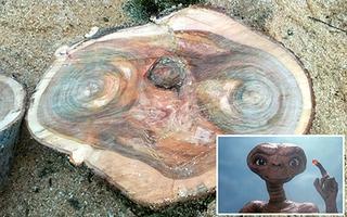Giật mình với mặt người ngoài hành tinh hiện trong thân cây