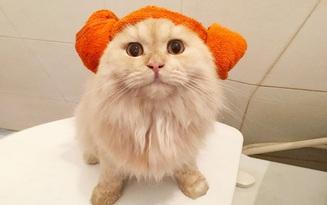 Gặp gỡ chú mèo cute thích tắm táp nhất quả đất