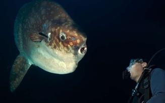 Tìm ra loài cá nặng ít nhất MỘT TẤN lần đầu tiên trong suốt hơn 1 thế kỷ