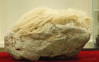 """Mang """"cục đá mọc tóc trắng"""" kỳ dị về nhà, người đàn ông giật mình khi phát hiện ra sự thật"""