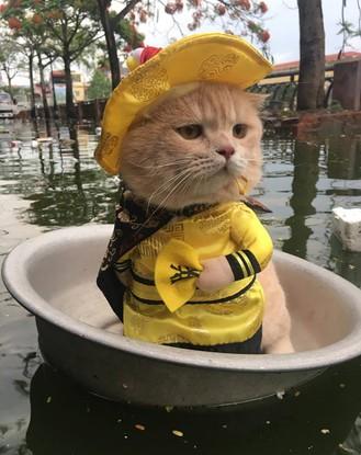 """Gặp chú mèo Hoàng Thượng đi chợ vi hành, các """"con sen"""" đều đứng ngồi không yên"""