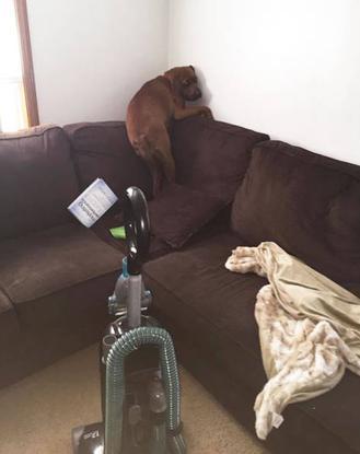 16 minh chứng cho thấy chó là loài nhát gan thì không ai bằng