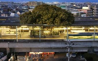 Vì một cây long não mà người Nhật không nỡ chặt đi xây sân ga và đây là câu chuyện đằng sau