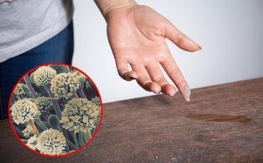 Dọn nhà đón Tết, người đàn ông Trung Quốc nhiễm nấm aspergillus vì ngôi nhà có quá nhiều bụi