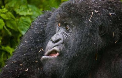19 con vật tội nghiệp bị chụp ảnh dìm hàng đúng lúc đang không ăn hình