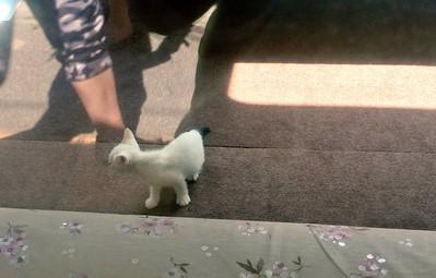 Nhật Bản mở quán cà phê mèo đầu tiên trên tàu hỏa