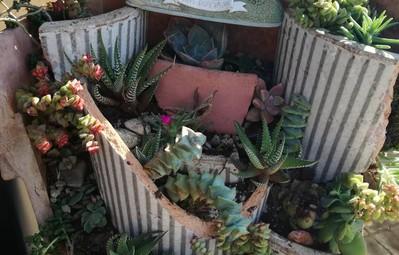 17 khu vườn tí hon được làm từ những chậu hoa vỡ