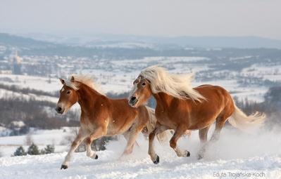 15 giống ngựa tuyệt đẹp xứng danh với ngôi vị nam vương của thế giới tự nhiên