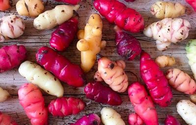 Ngắm 10 loại rau củ với vẻ ngoài như đến từ ngoài hành tinh