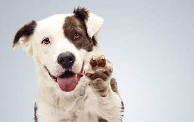 """Ơn giời, có một nơi mà loài chó đúng là """"sướng như chó""""!"""