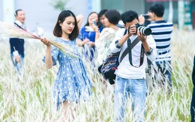 Dịp cuối tuần, người dân háo hức chụp ảnh với hoa cỏ lau giữa lòng Hà Nội