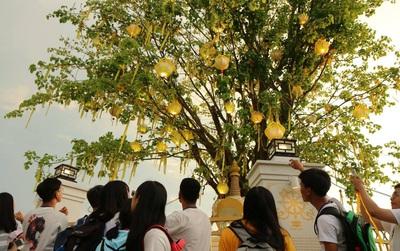 Cây điều ước tại Long An làm ấm lòng sinh viên