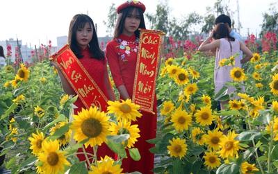 Vườn hoa hướng dương bị mất mùa, bạn trẻ Đà Nẵng kéo đến chụp ảnh và quyên góp cho chủ vườn