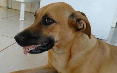 Cười gần chết với cô chó tinh nghịch không ngậm được mồm vì đeo răng giả
