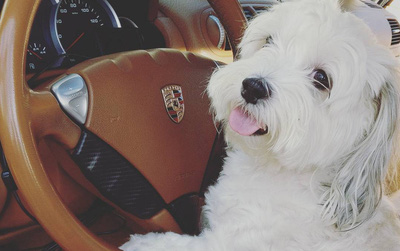 Hâm mộ cuộc sống sang chảnh của 11 chú chó đại gia ăn chơi không sợ mưa rơi