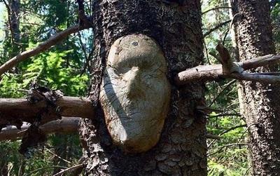 16 gương mặt ma quái tình cờ mọc trên những thân cây vô tri, vô giác