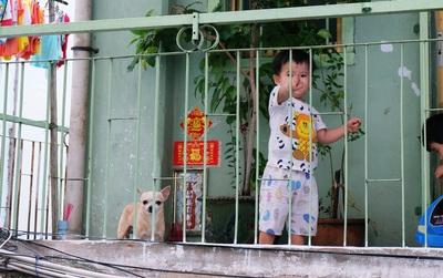 Tranh cãi vấn đề cấm nuôi chó, mèo trong chung cư ở Sài Gòn: Vẫn chưa đến hồi kết!