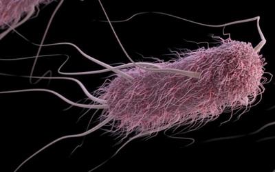 Chuyên gia Harvard: Ác mộng vi khuẩn kháng kháng sinh đang trở nên nguy hiểm hơn chúng ta tưởng