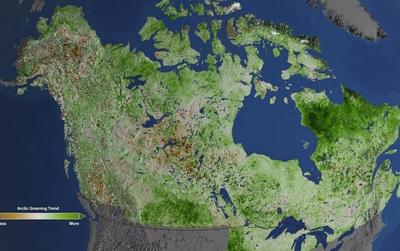"""Bắc Cực đang bị """"phủ xanh"""" với tốc độ khủng khiếp và đến giờ con người mới hiểu tại sao"""