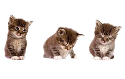 Chọn chú mèo có biểu cảm đáng yêu nhất để biết được ưu điểm và nhược điểm của bản thân