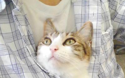 Công ty Nhật Bản thưởng tiền cho các nhân viên nuôi mèo