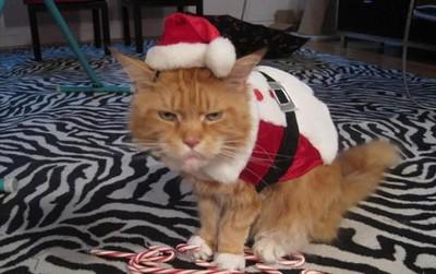 18 khuôn mặt chán đến tận cổ của động vật khi mùa Giáng Sinh đến