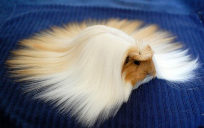 Chiêm ngưỡng 17 loài vật sở hữu bộ lông đặc biệt nhất thế giới