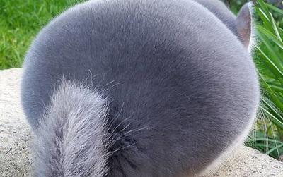 Phát hiện loài sóc đáng yêu có cặp mông to như quả bóng bay