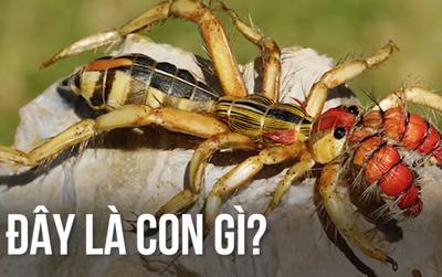 Đây là nhện hay bọ cạp? Đảm bảo 99% sẽ trả lời sai