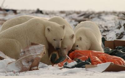 Thực sự lo ngại: Đến vùng xa nhất của Bắc Cực và con người tìm thấy thứ này