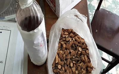 Nghệ An: 3 người tử vong sau khi uống rượu ngâm cây lá ngón
