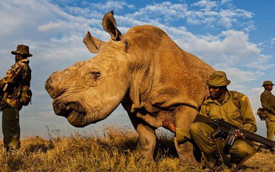 Cái chết của Sudan - chú tê giác trắng cuối cùng và lời cảnh báo đến toàn nhân loại